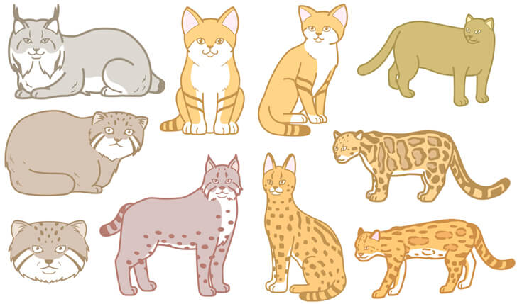 猫科動物のイラスト